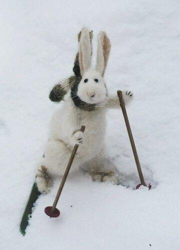 Заяц на лыжах