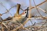 Отряд Воробьинообразные (Passeriformes)