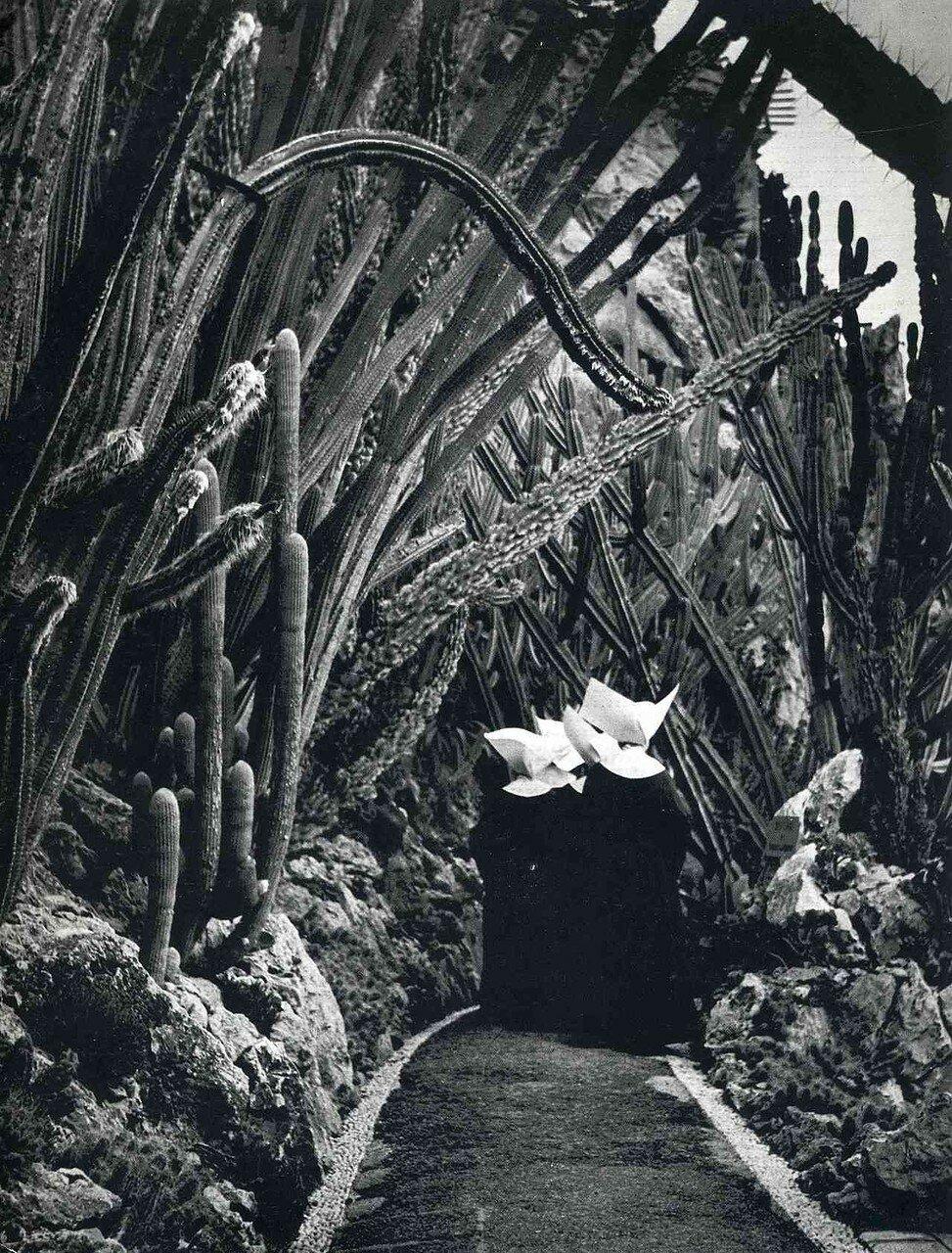 1945. Экзотический сад в Монако