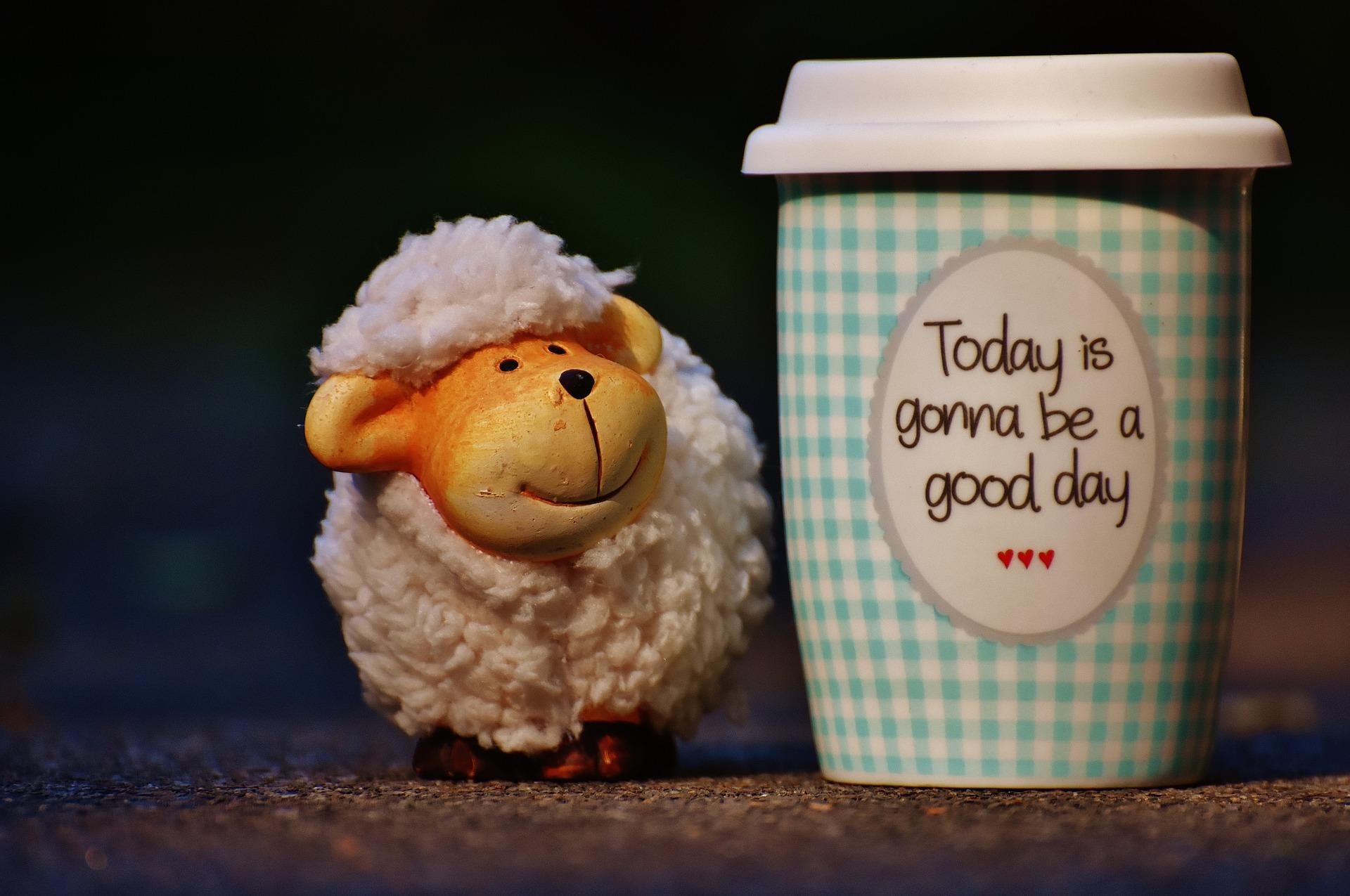 sheep-1644142_1920.jpg