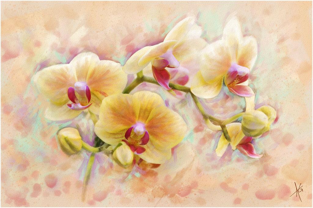 Цветы фото красивые нарисовать