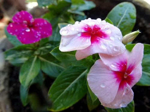 Красота под дождём...
