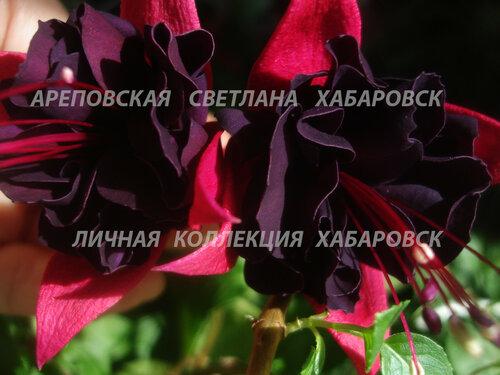 НОВИНКИ ФУКСИЙ. - Страница 5 0_157e9e_b996f574_L