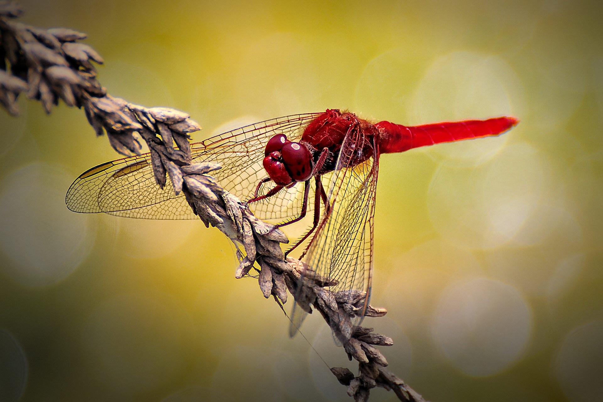 Дама в червоному
