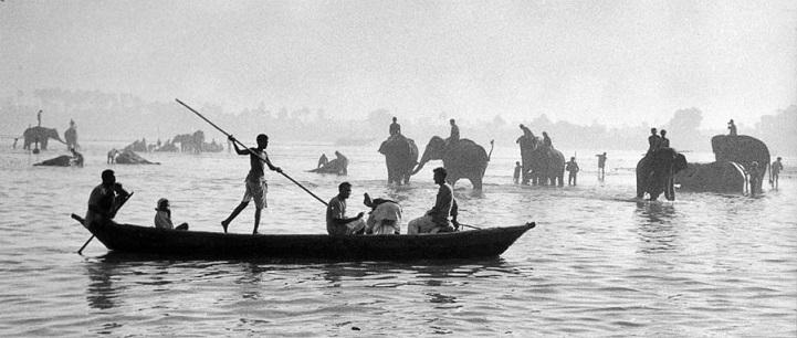 Индия, 1956 год. В реке Ганг моют слонов.