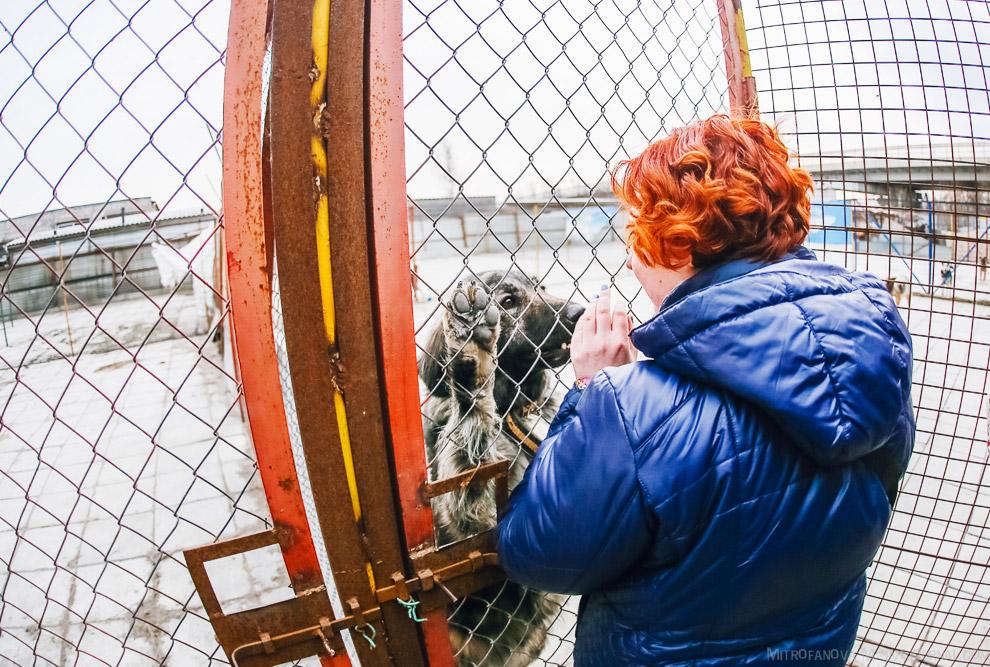 22. Каждая собака в приюте чипирована, а значит она уже частично подготовлена для путешествий,