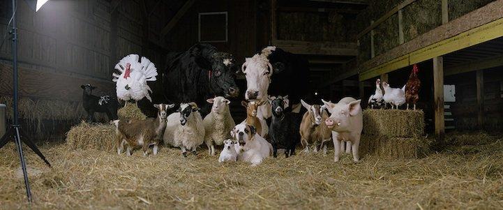 Портреты деревенских животных, как метафора работы в модельном бизнесе