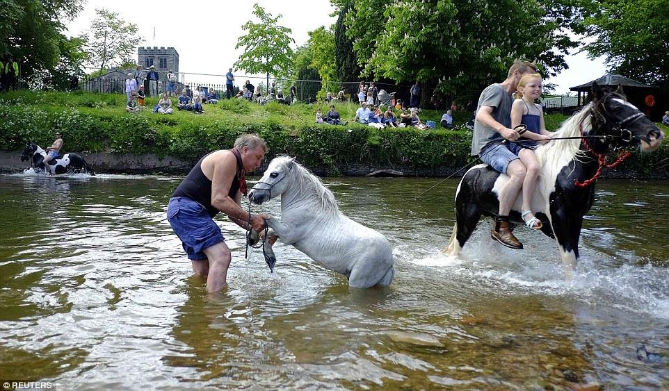 Рука помощи: мужчина уделяет внимание своей лошади, пока остальные просто катаются верхом по реке.