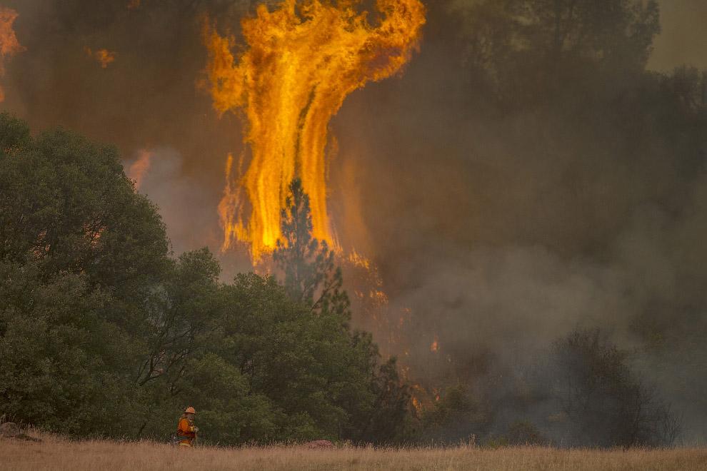 5. Дупло выгорела, Калифорния, 1 июля 2008. (Фото David McNew):