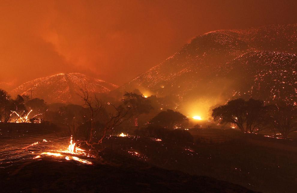 10. Олень и сгоревший лес в Калифорнии, 4 мая 2013. (Фото David McNew):