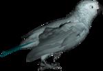 feli_syd_parrot.png