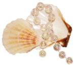 feli_syd_shells and gems.png