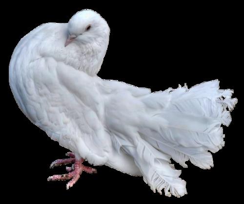 Ptice..... 0_dac1d_131cf87a_L