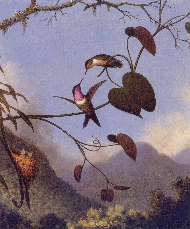 Martin Johnson Heade (16).jpg