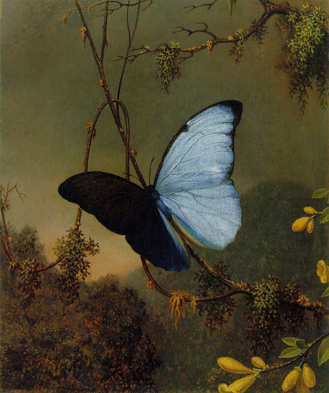Martin Johnson Heade (27).jpg