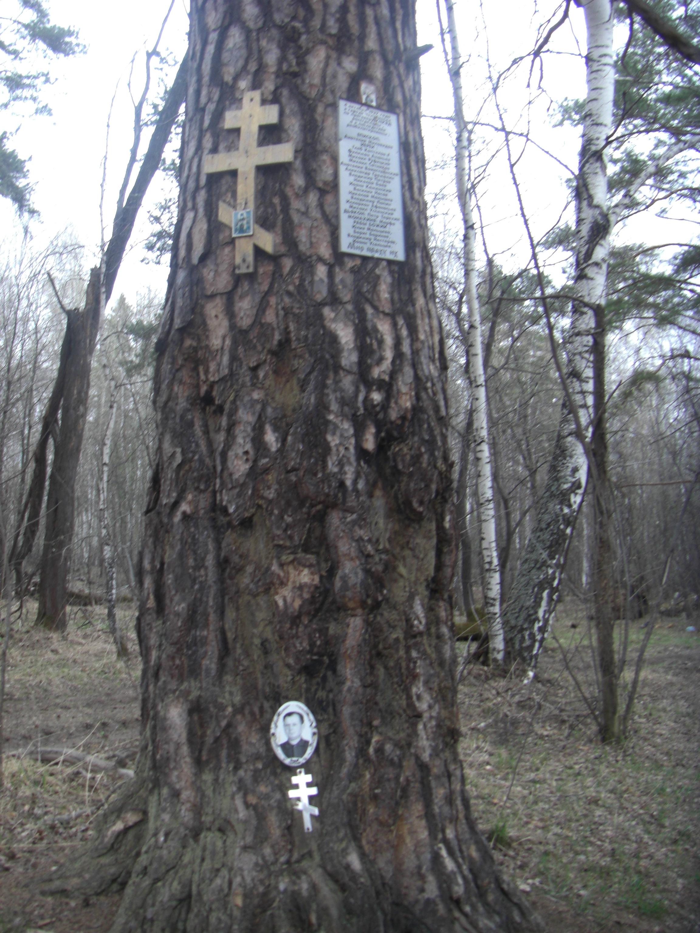 Дерево в лесу рядом с Аракульским Шиханом (13.05.2014)