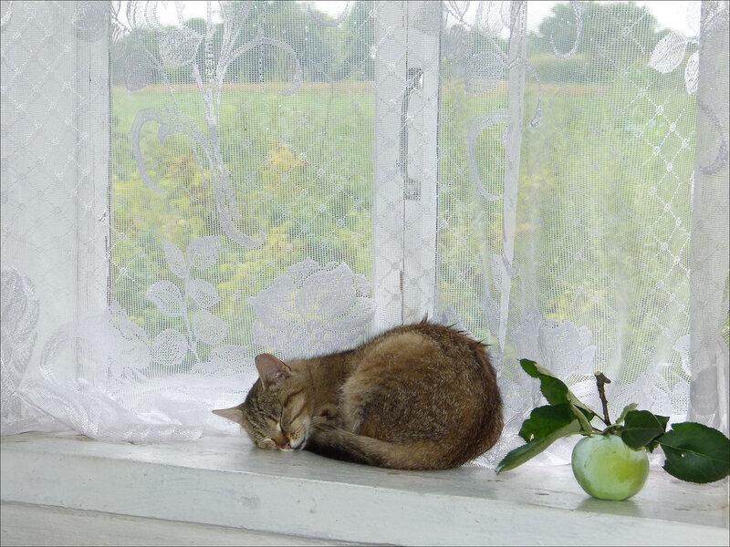 Рисунок кот спит на подоконнике