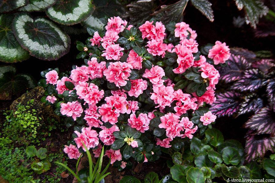 Ароматные цветы красивые идеи для