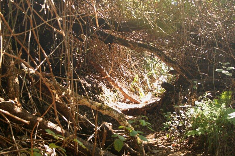 Тенерифе, горы Анага, реликтовые леса, пешеходный маршрут