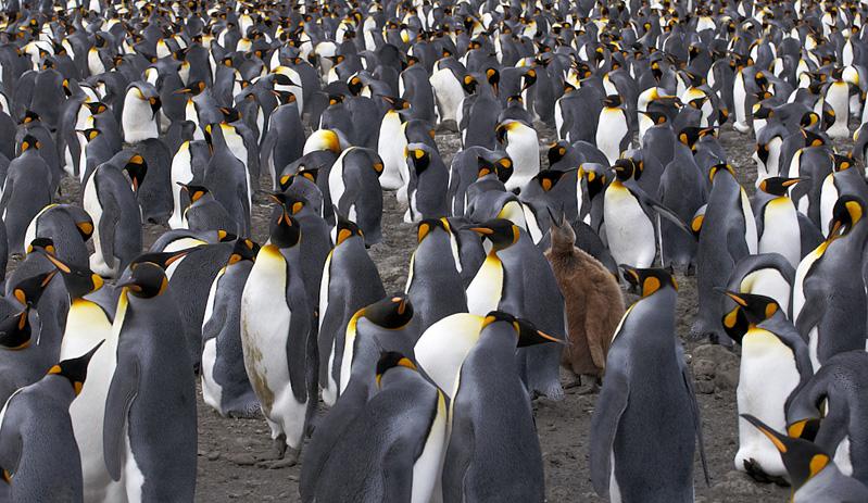 Лучшие фотографии животных за февраль