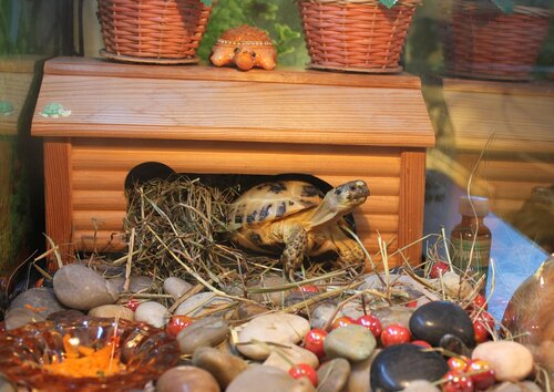 Дом для черепахи сухопутной