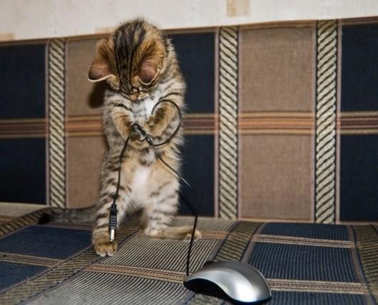 Котики навсегда: много прикольных фото с котами