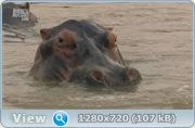 В дебрях Африки / Wildest Africa (2010/HDTVRip)