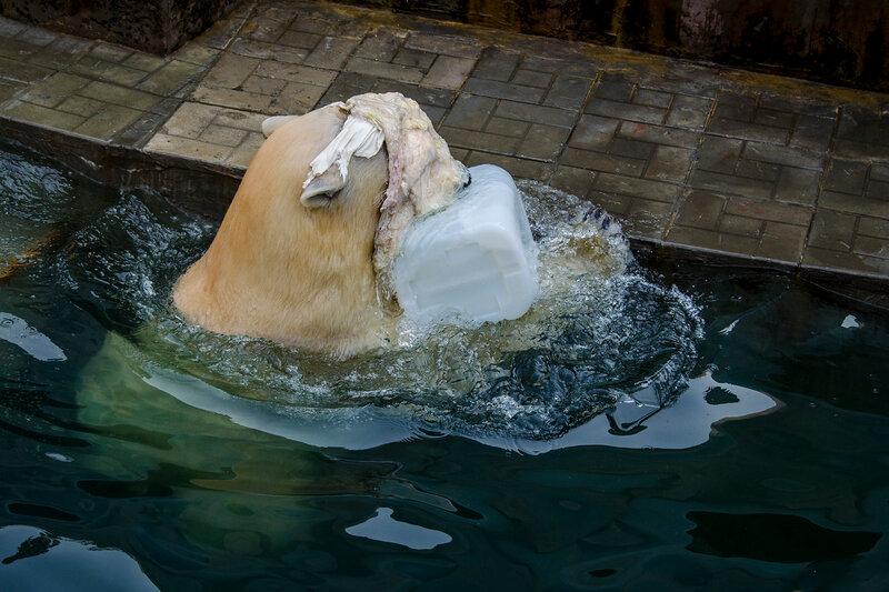 Zoo Novosibirsk.  Ídolo do público - Gerda.  Algo saiu da água)))