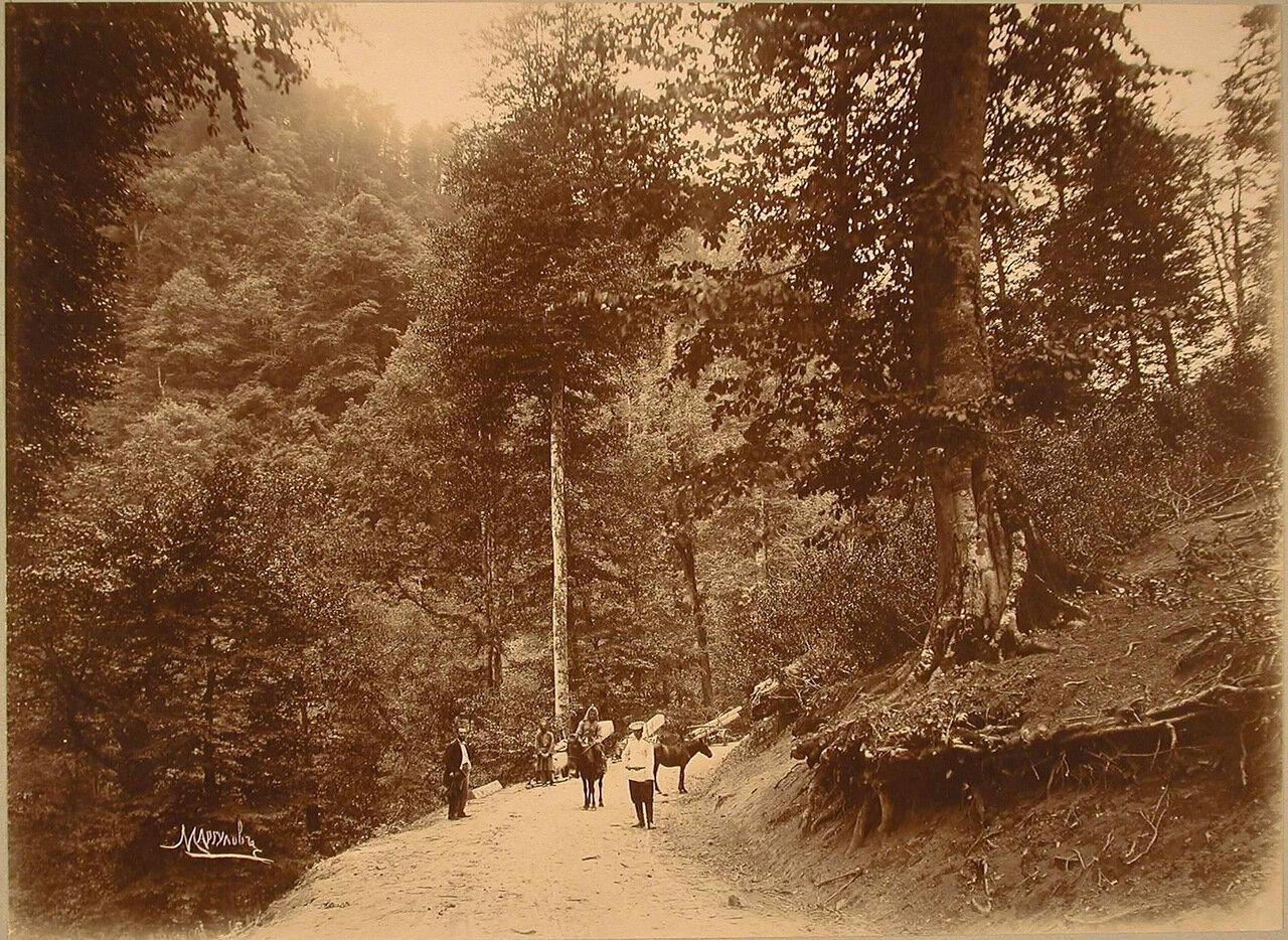 Вид горной дороги, идущей по Зекарскому перевалу через хребет Аджаро-Ахалцихских гор