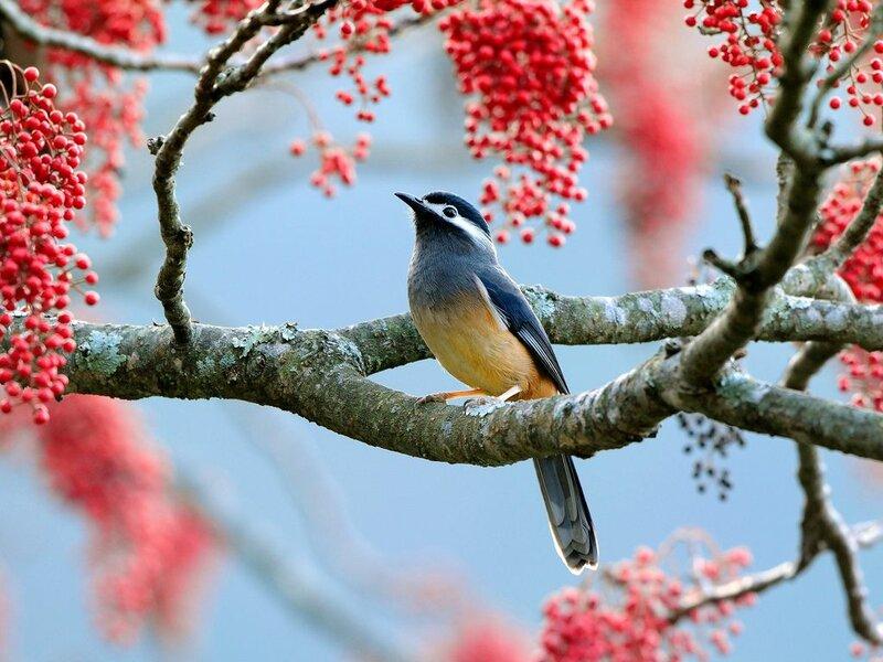 Птички весенние, птички прекрасные.
