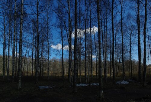 удельный парк ранней весной
