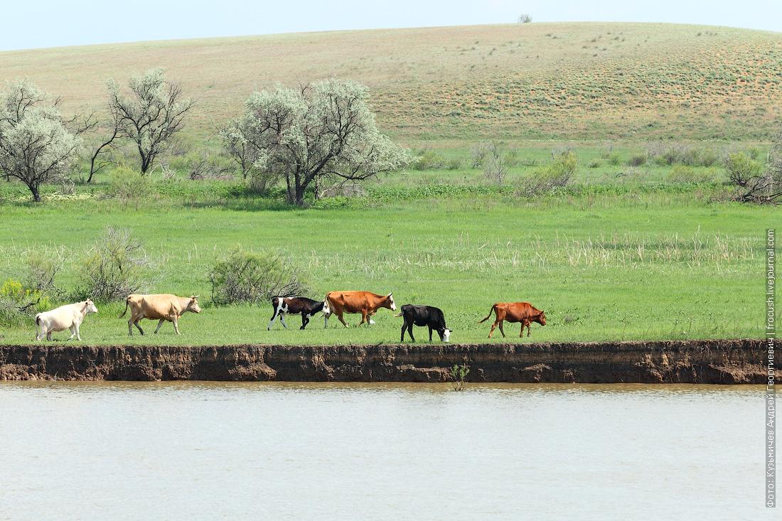 теплоход Русь Великая в Казахстан река Бахтемир