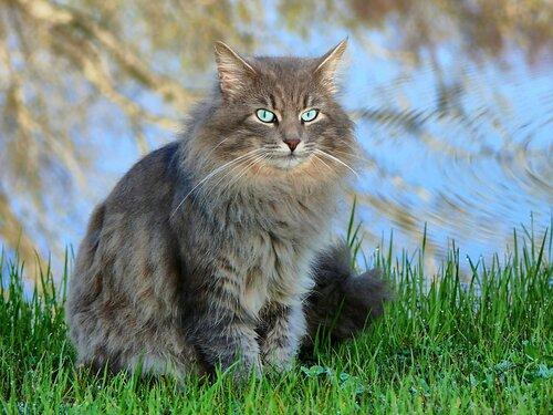 Кошки, кошки, кошки 0_66cdf_b14afad2_L
