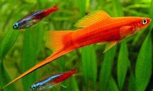 Выбираем аквариумных рыбок для своего дома
