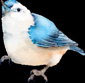 птички синие