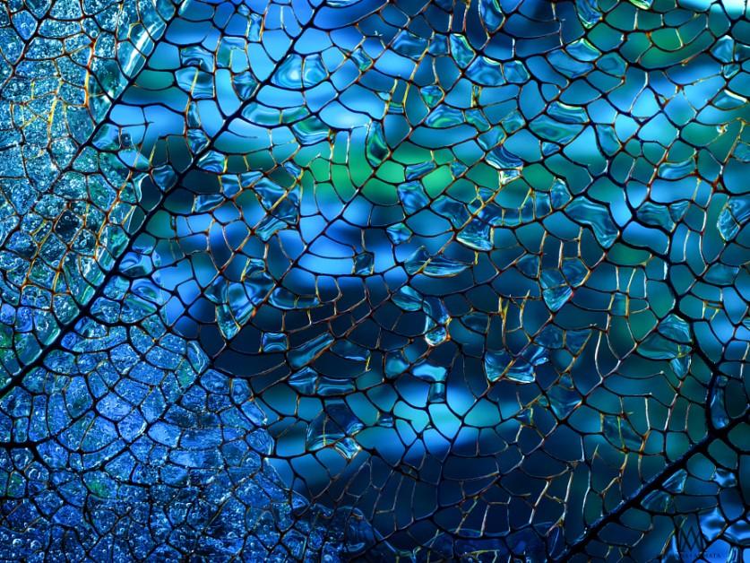 Коралл. Автор фото: Марианна Армата