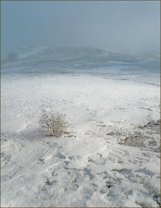 Страшный туман и стойкий кустик