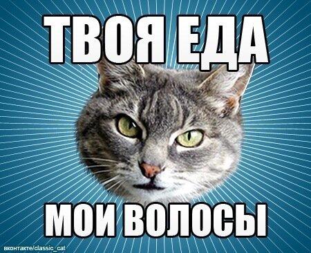 Кошка ходит по квартире зажав лапой