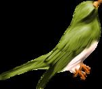 птица12.png