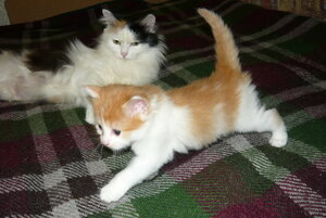 Мартовские котята