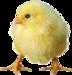 """Автор схемы  """"Цыпленок """". схема.  Размеры: 184 x 190 крестов.  0. Картинки."""