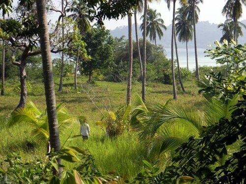 Остров Бутанг. Лес кокосовых пальм.