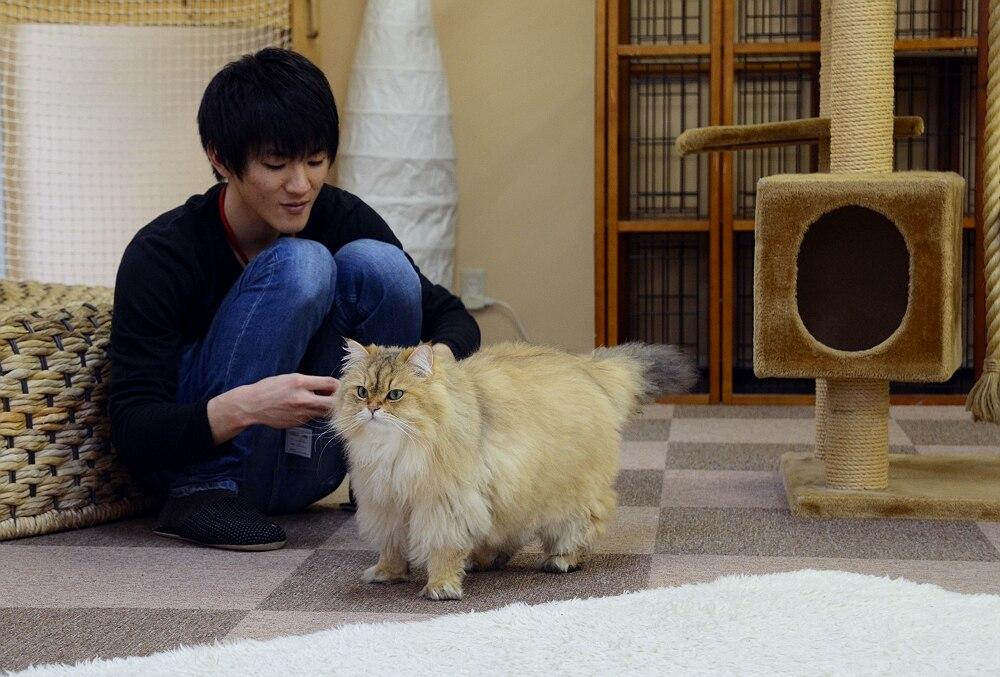 Картинки человека с головой кота на