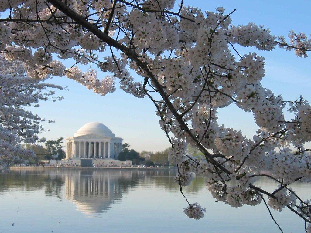 Пока смотрим фото цветения сакуры прошлого шода