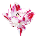 sekadadesigns_tracesofspring_element(52).png