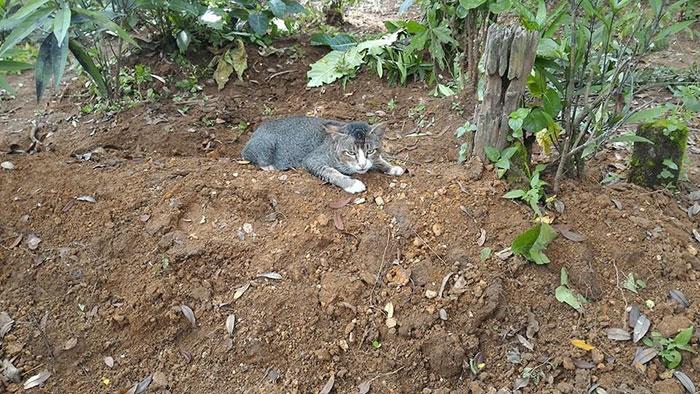 Кошка целый год живет на могиле своей хозяйки