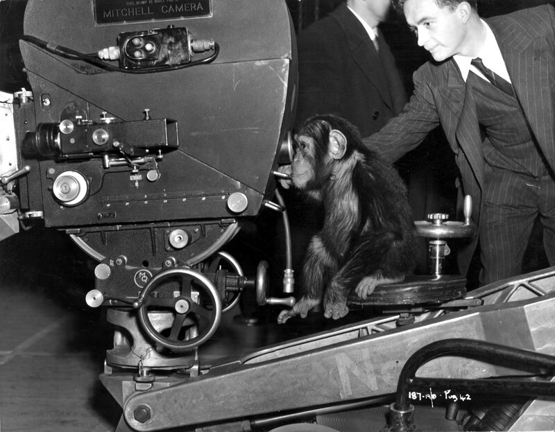 Chimp Cameraman
