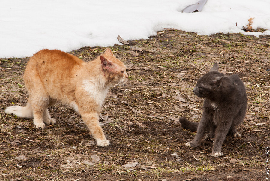 кошачья разборка