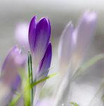 ароматы весны