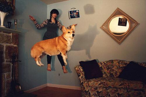 Собаки тоже летают